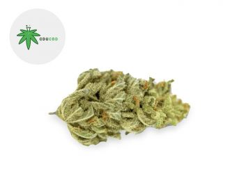 Fleurs CBD Fleur Amnesia Haze CBD Sous serre 16% Cducbd