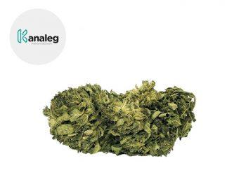 Fleurs CBD Fleur Amnesia Haze CBD Sous serre 5% Kanaleg