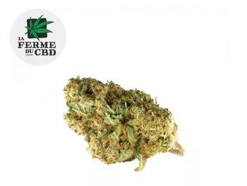 Fleurs CBD Fleur Amnesia CBD Indoor 19.5% La Ferme du CBD