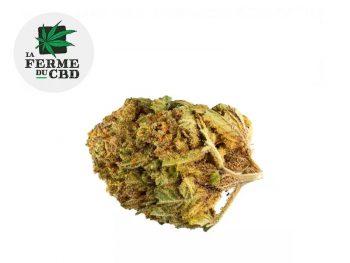 Fleurs CBD Fleur Bubble gum CBD Indoor 15% La Ferme du CBD