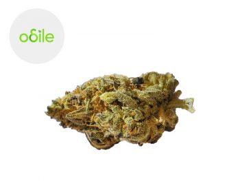 Fleurs CBD Fleur Gold Kush CBD Indoor 4.3% Odile Green
