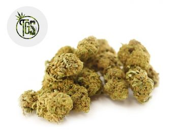 Fleurs CBD Fleur Super Lemon Haze CBD Indoor 13% The Green Store