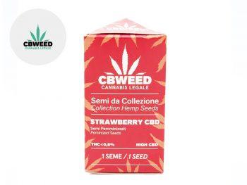 Graines CBD Graines Strawberry CBD autoflorissantes Cbweed
