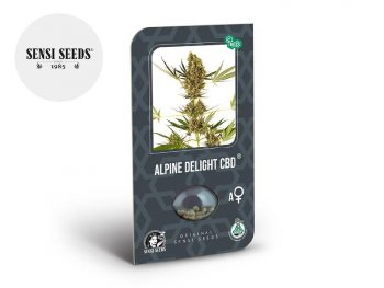 Graines CBD Graines Alpine Delight CBD autoflorissantes Sensi Seeds