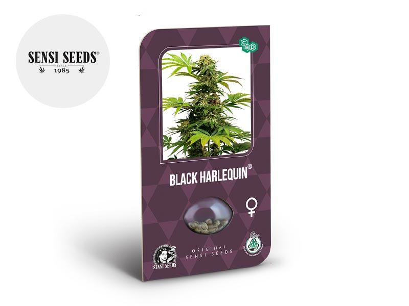 Graines CBD Graines Black Harlequin CBD féminisées Sensi Seeds