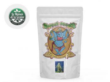 Graines CBD Graines Sweet Pure CBD autoflorissantes La Maison De La Graine