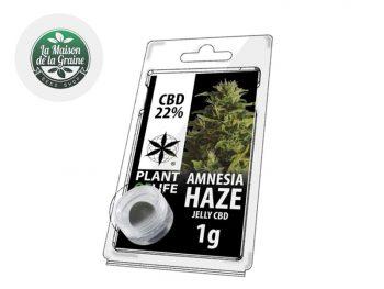 Haschich CBD Résine Amnesia Haze CBD 22% Plantoflife