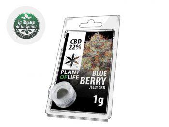 Haschich CBD Résine BlueBerry CBD 22% Plantoflife